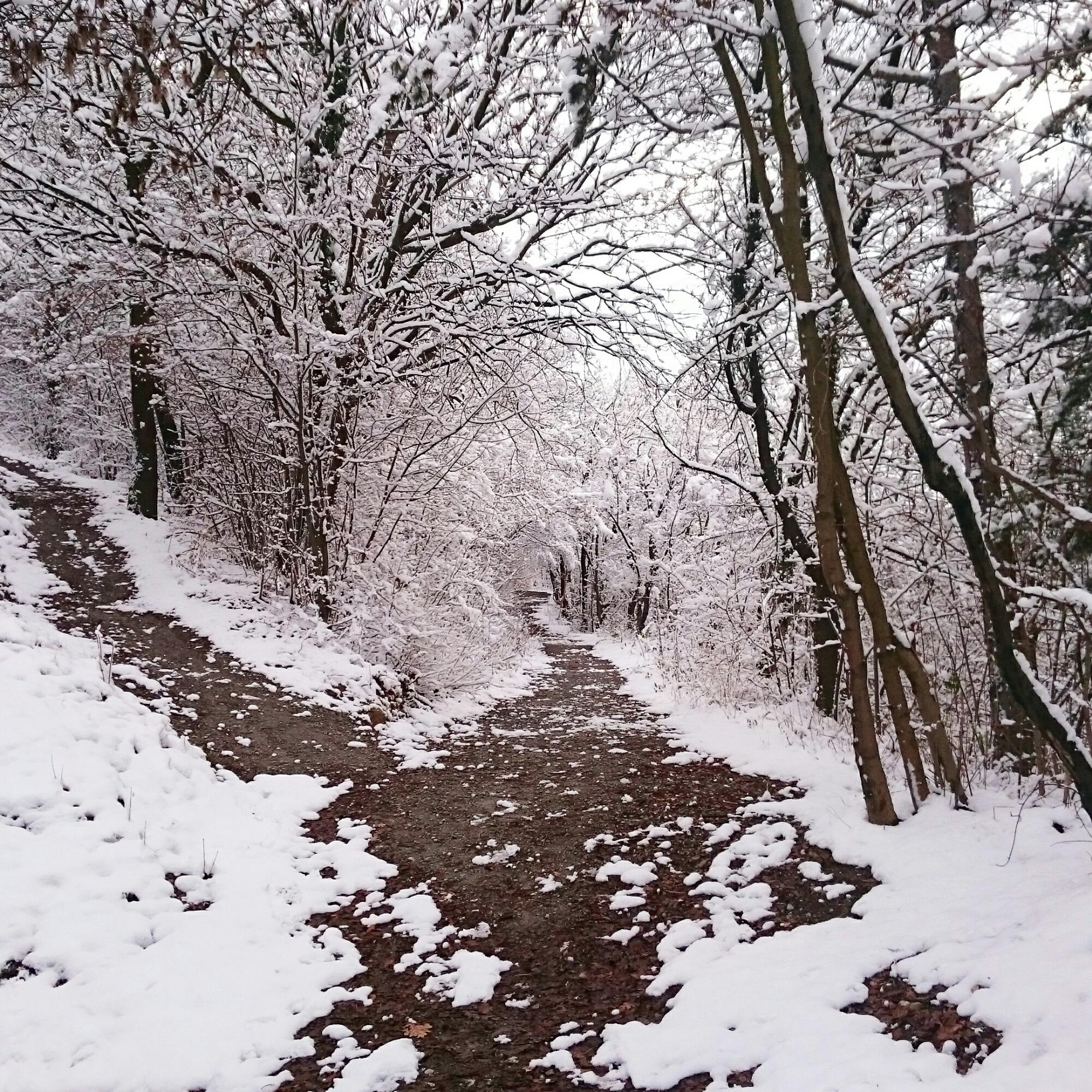 Adorabila iarnă din UK