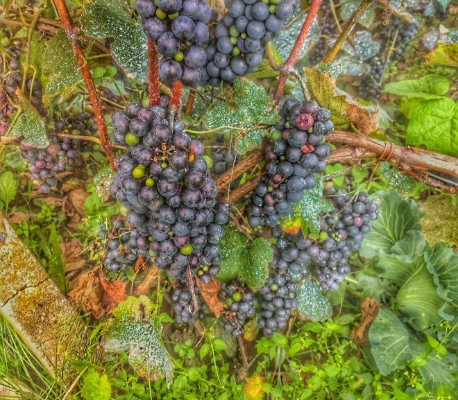 Agro: Repere de Septembrie