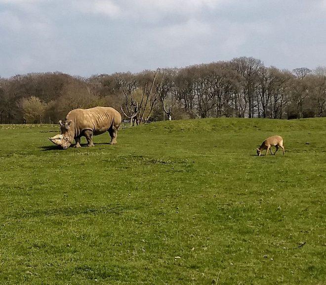 Rinocerbi si căprioare
