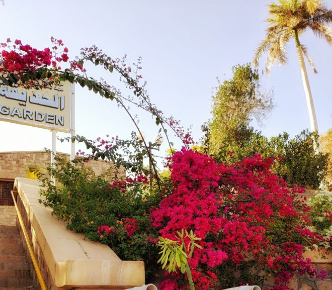 Egipt 8. Aswan – Gradina Botanică