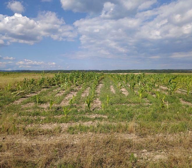Ultrascurt cu agricultură și fonduri europene