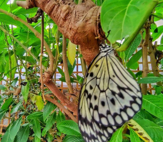 Instagramă: Ferma de fluturi